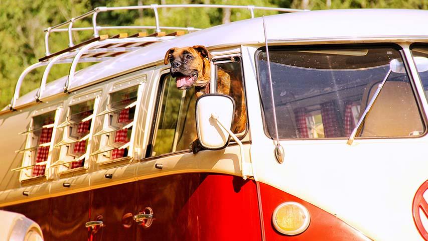 Volkswagen-t1-bus-huren-trouwvervoer